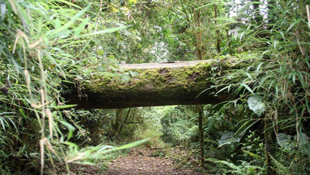 cloud forest volcano barva